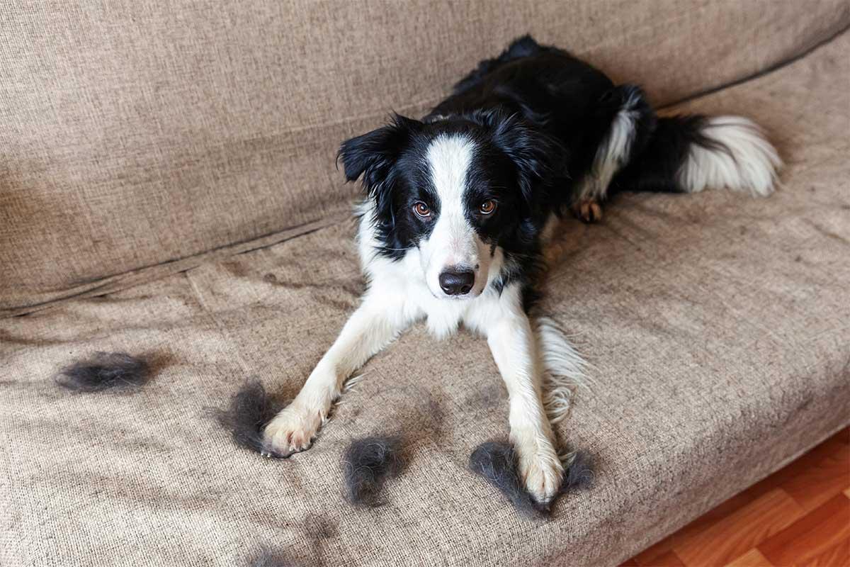 Kutyaszőr takarítás